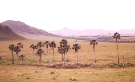 Le Cerrado, savane d'Amérique du Sud.